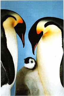 Императорские пингвины, море Уэдделла