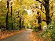 Bella carretera en la temporada de otoño. Wallpaper de una linda carretera . bella carretera en la temporada de otoã±o