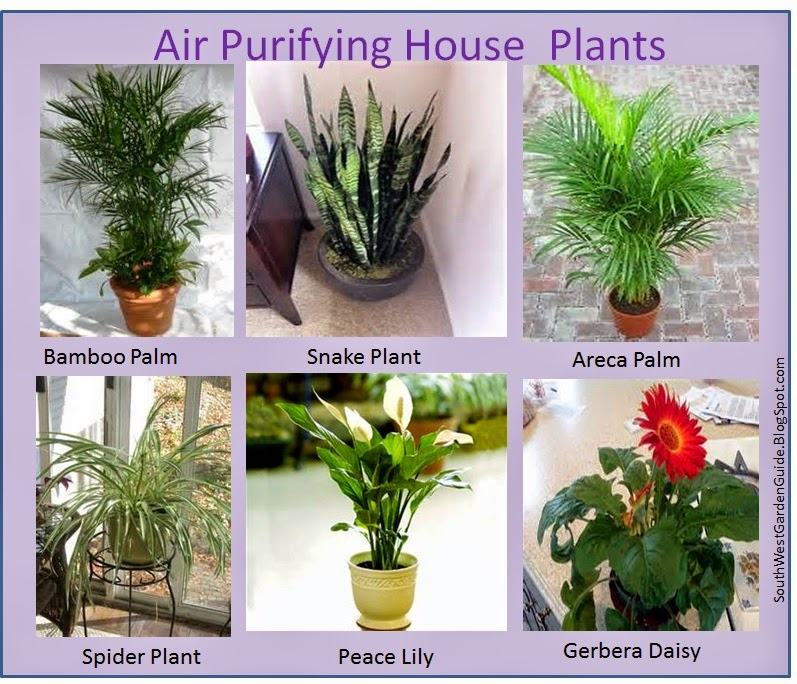 Southern california garden guide basic gardening your for Nasa indoor plant list