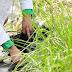 Plant-e blijft in Wageningen dankzij bemiddeling gemeente