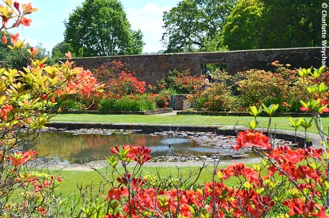 The Galloping Gardener A Sortie Into Three Somerset Gardens Barrington Court Lytes Cary And