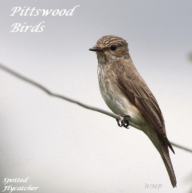 Pittswood Birds