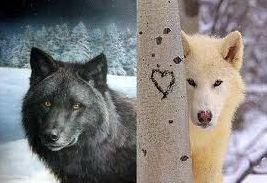 A bennünk élő két farkas