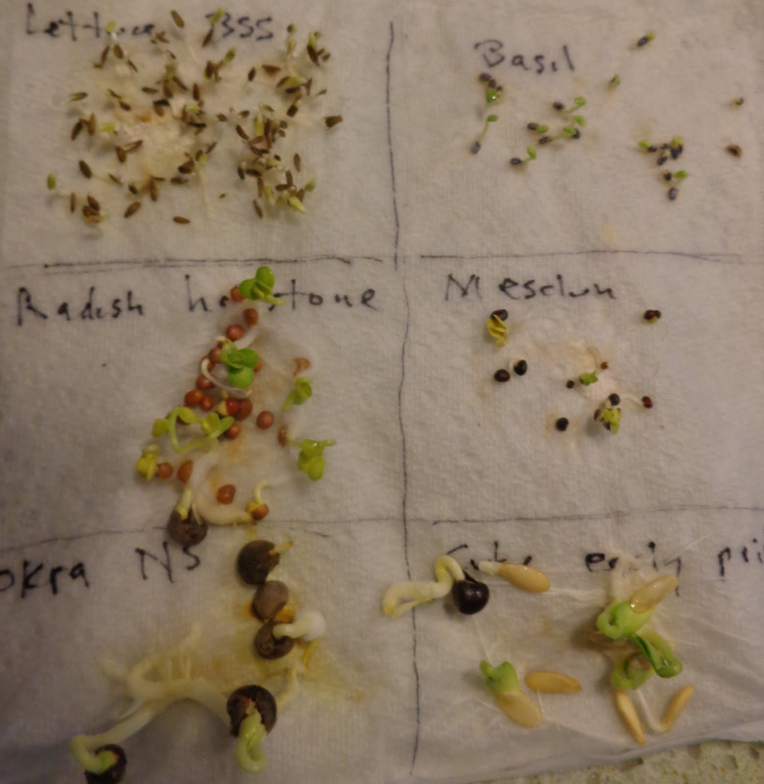 allelopathy affects germination of radish seeds Results of alfalfa-leaf extract treatment on rye and 7 and radish seed germination • describe the observable effects of allelopathy on seed germination.