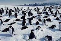 Quần thể chim cánh cụt
