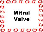 Blood Circulation: Left Atrium Through Mitral Valve