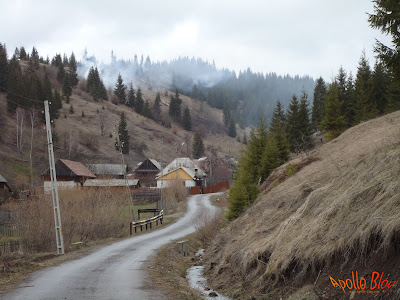 Drum asfaltat Platonesti