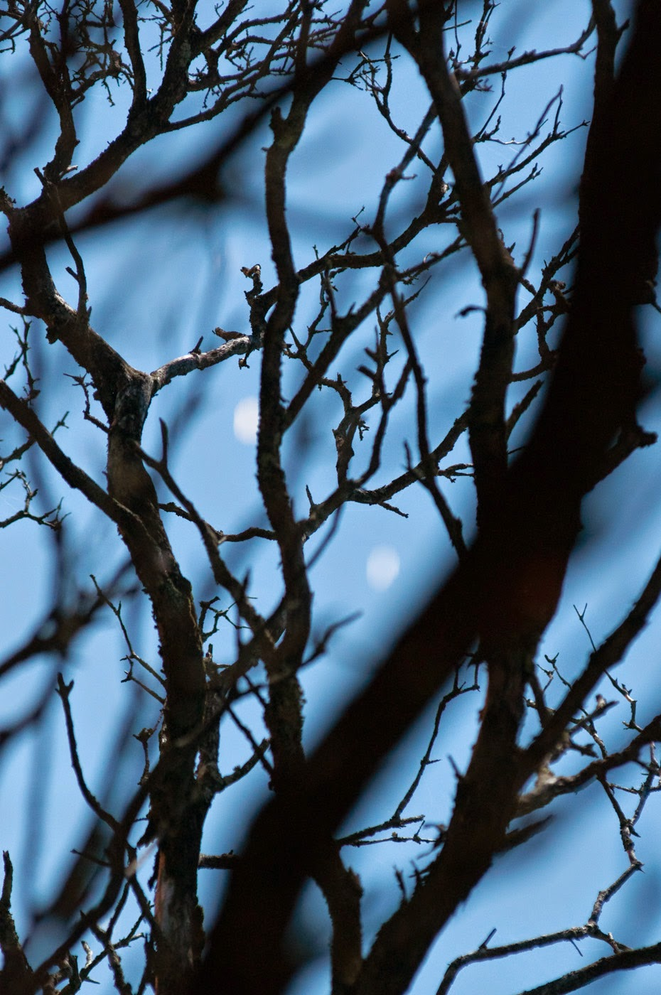 Tim Macauley, anglesea, Victoria, Australia, Australian, photographic artist, the light monkey collective, night garden, abstract, abstraction, moonah tree, coastal, coastal moonah woodlands, silhouttes, moonlit, graphical, graphic, atmospheric