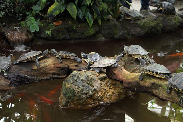 Schildkröten im Botanischen Garten München