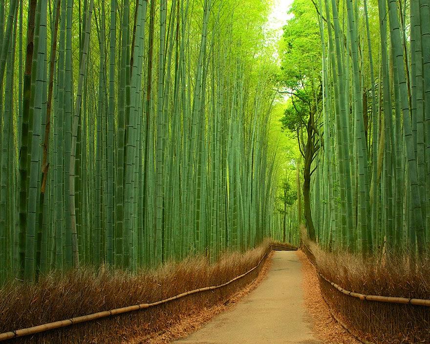 Jalan Bambu Di Kyoto, Jepang
