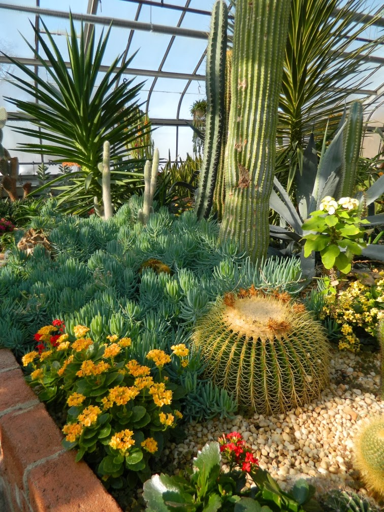 Cacti succulents Centennial Park Conservatory Etobicoke desert garden by garden muses-not another Toronto gardening blog
