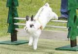 Ralph's Rabbits Are Always In Training