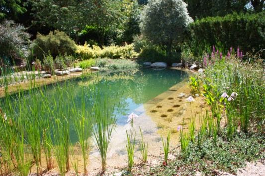 Ecological pools natural swimming ponds home garden park for Koi pond natural swimming pool