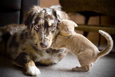 gato beijando cachorro, cat kissing dog, gatinho beijando cachorrino, gato beijando cão, gato e cão, gatinho e cão se amando, gato e cão se abraçando, amor cão e gato