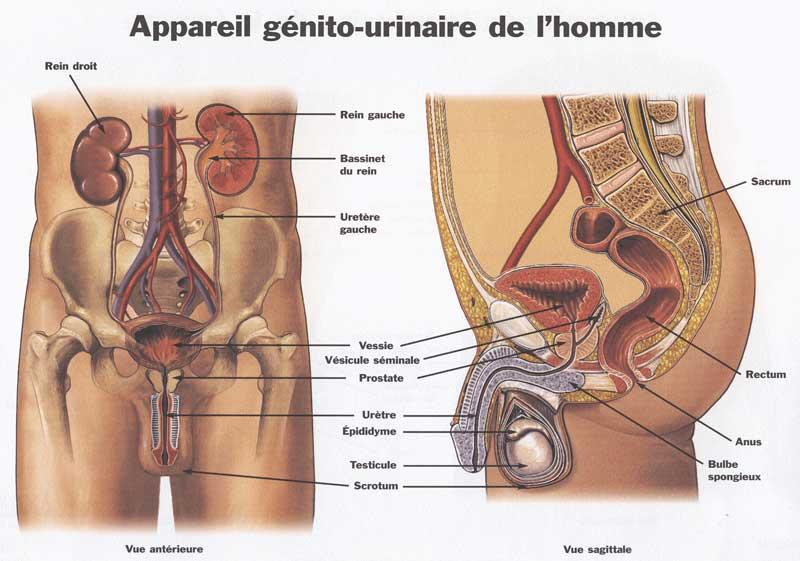 Favori Blog 75: Infos santé : Kiné Ostéo-L'incontinence urinaire FM97