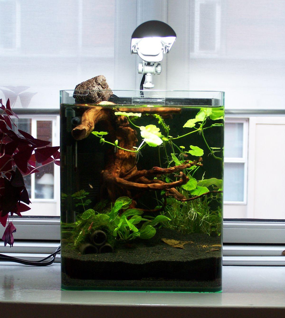 10 gallon fish tank vs 20 gallon 20 gallon long for Two gallon fish tank