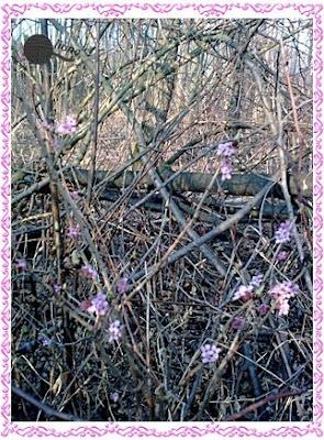 """Wiosna w mojej duszy gra...""""Pierwiosnek"""" W. Broniewski"""