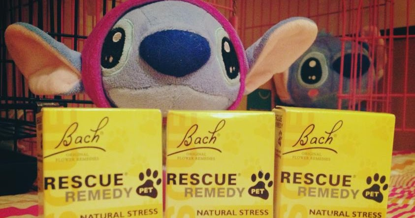 Rescue Remedy For Cats Amazon