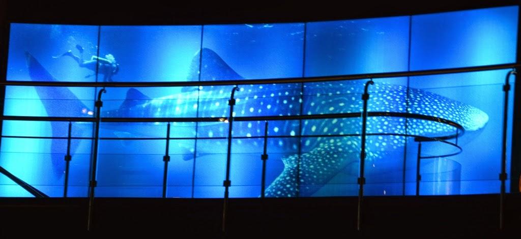 Barcelona Aquarium whale shark display