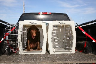 Ruff Tough Kennel Reviews >> Willowynd Ranch Vizslas Bird Dog Training Ruff Tough Kennels Are