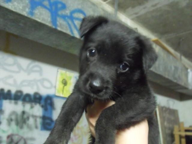 Adotta Un Cane A Siracusa Adottata Cucciola Di 1 Mese E Mezzo