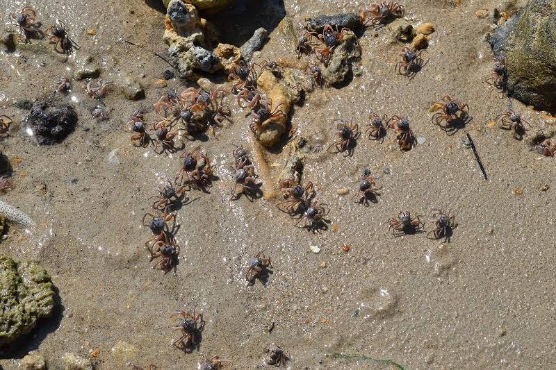 Krabi, Thailande, Pine bungalow, plage, crabes