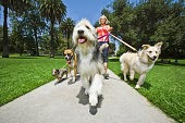 Walking your dog to help them and you lose weight. A Happy Havanese