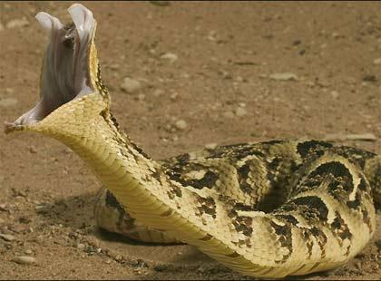 Horrible Wild Snake