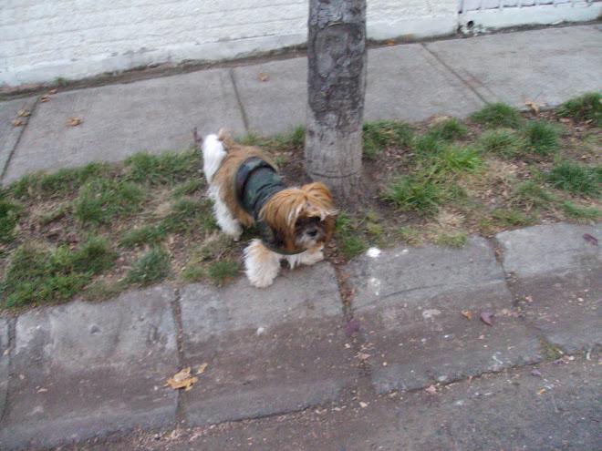 Tofi esperando para cruzar