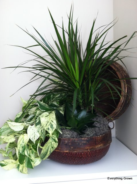 Everything grows elegant foliage bowl easy to maintain for Plants that are easy to maintain