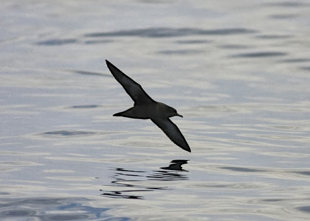 Scilly Isles, Pelagic, Fishing, Birding