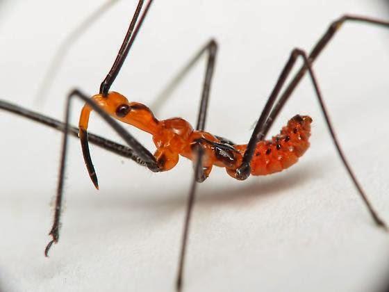 Serangga Paling Seram Di Dunia