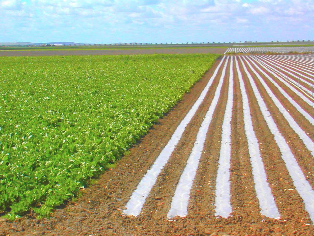 de agua por parte del mismo agricultor, nutriéndose el suelo de la