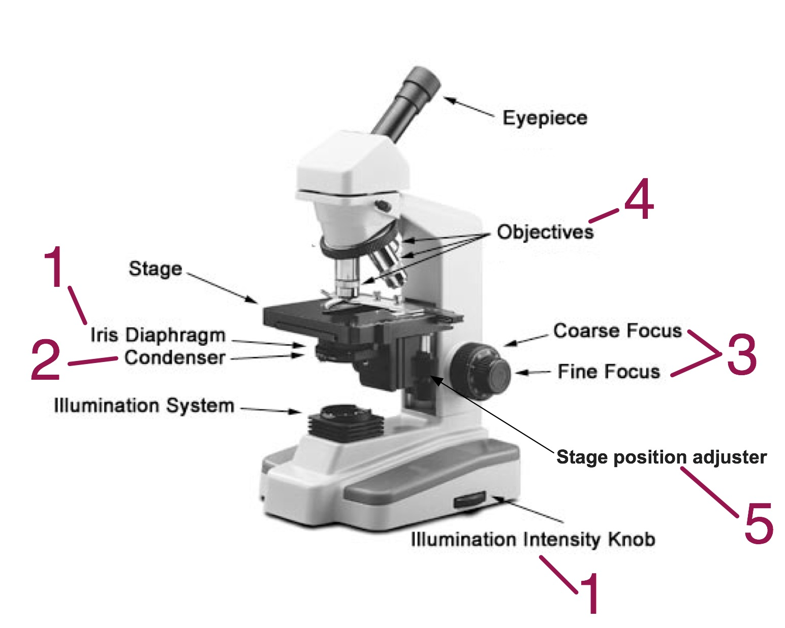Parts of a microscope - numbers 1 - 5 relate to the above description