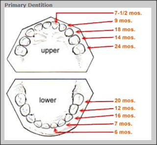 dentition order primary