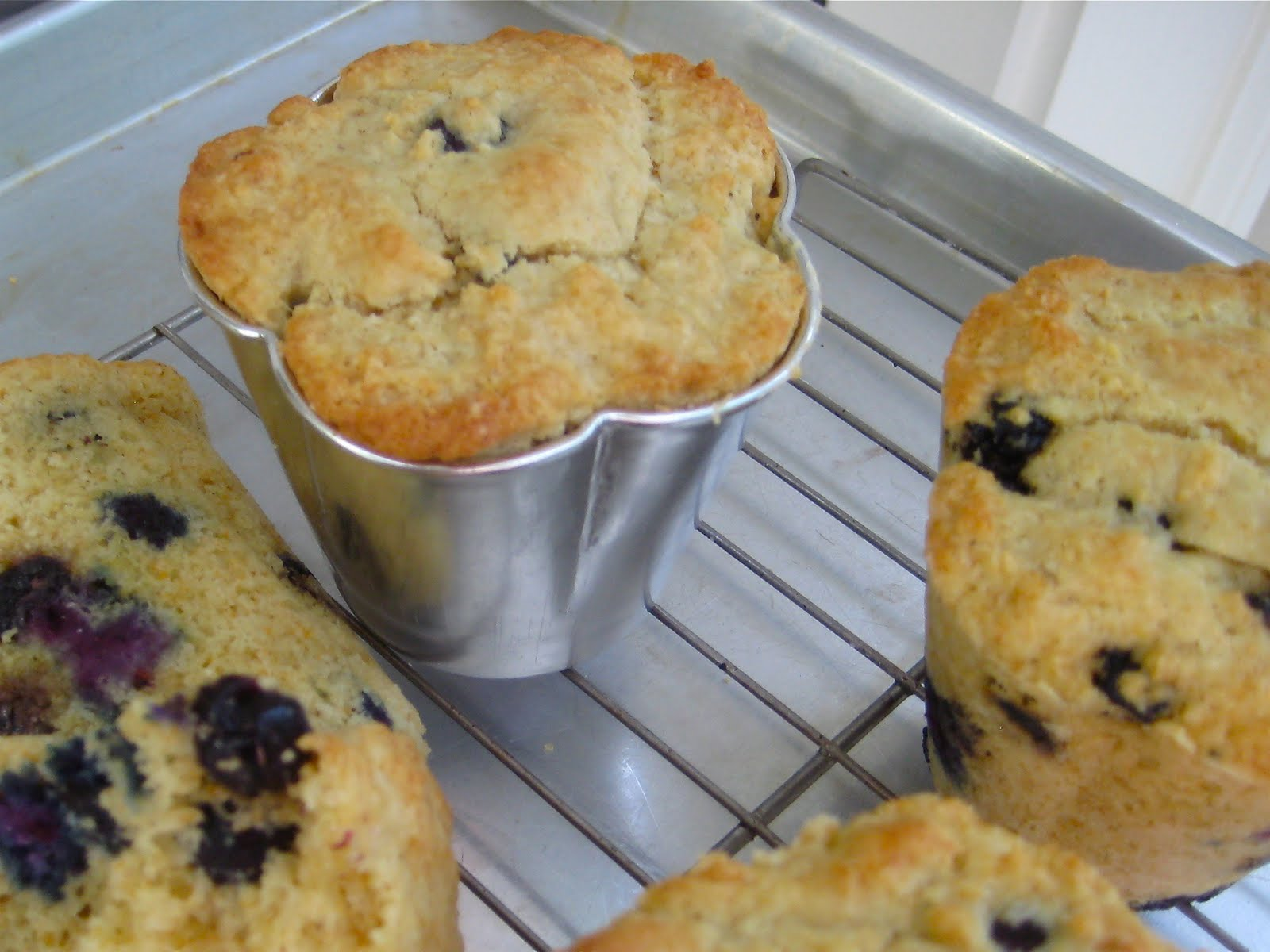 Can Dogs Eat Blueberry Muffins