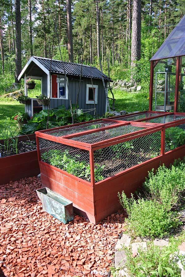 skydda jordgubbar från fåglar
