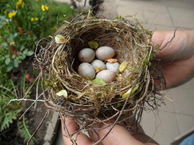 Nest, Garten, gartenkult.blogspot.com