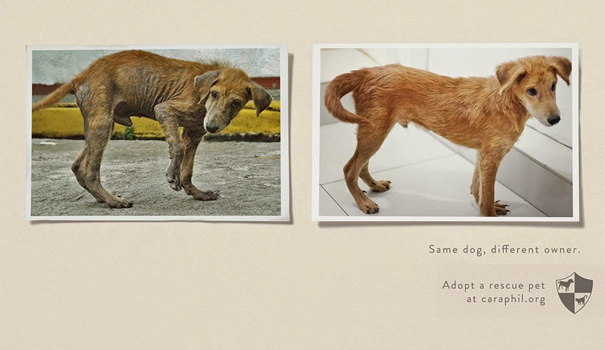 Same Pet, Different Owner. Adopt A Rescue Pet - 33 Powerful Animal Ad Campaigns That Tell The Uncomfortable Truth