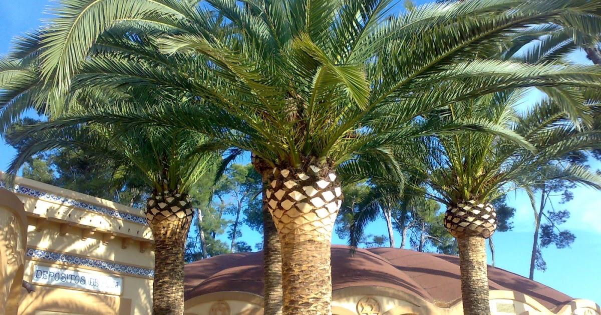 Poda de arboles y palmeras en valencia experiencia y - Jardineria en valencia ...