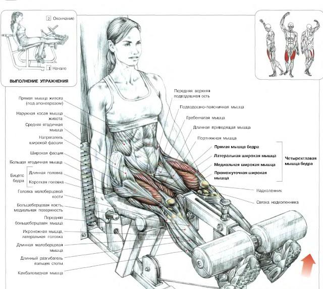 Разгибания ног в тренажере - изолирующее упражнение на квадрицепсы - передн