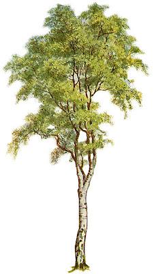 Dissertation Tree