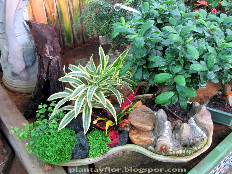 Plantas y flores Plantas ornamentales