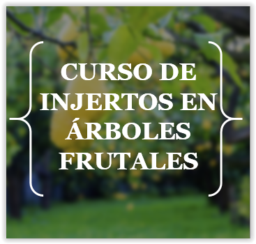CURSO DE INJERTOS EN ÁRBOLES FRUTALES - SÁBADO 11 DE MARZO - CLIC EN LA FOTO PARA VER TODA LA INFO