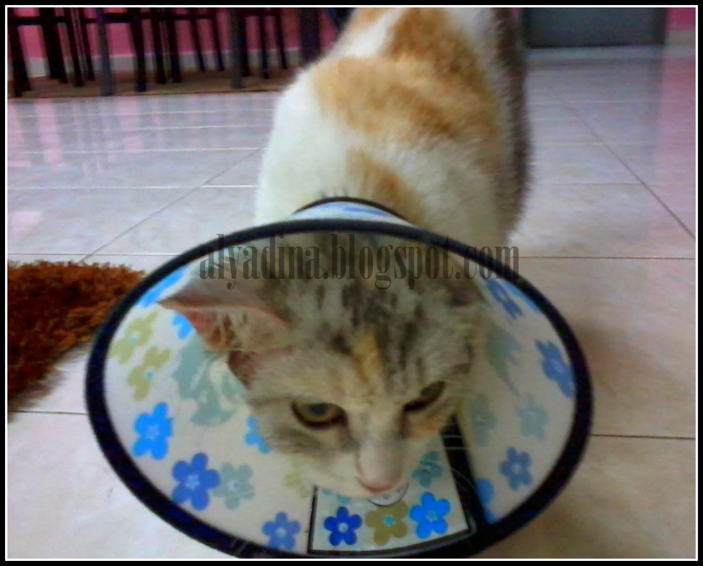 kucing sakit