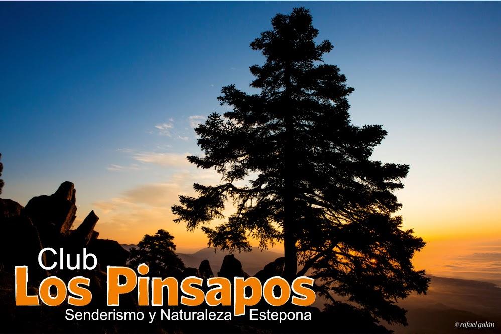 Los Pinsapos - Senderismo y Naturaleza