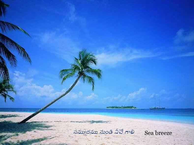 http://4.bp.blogspot.com/-vAZi7uLldaI/Te-UY-_3psI/AAAAAAAADAc/dCDN3RVdUQU/s1600/Seashore-Coconut%2Btree.jpg