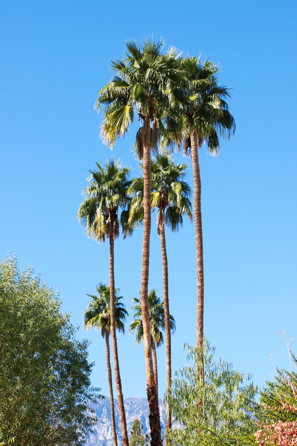 Sunshine and palm trees at The Parker Palm Springs