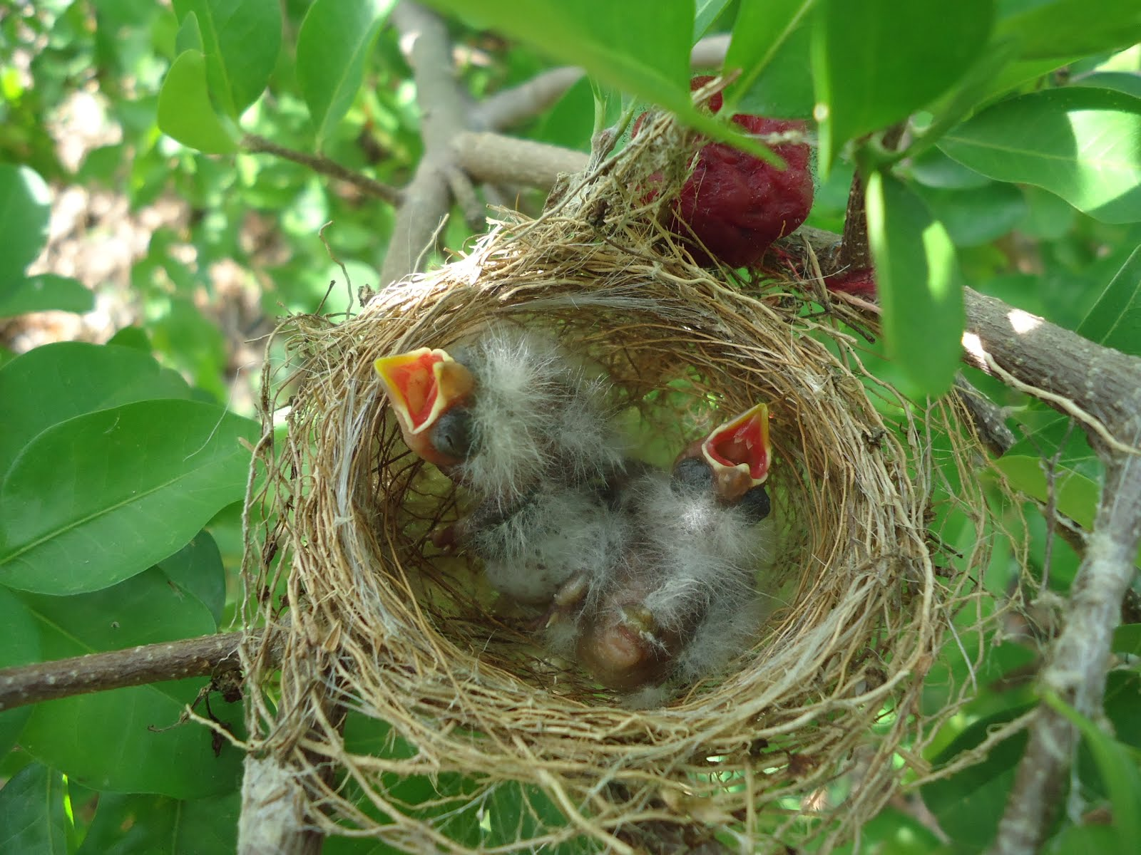 Filhotes de passarinho esperando alimentos