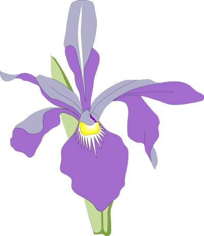 All Cliparts: Orchid Clipart